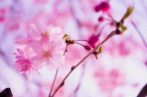 Painted Sakura
